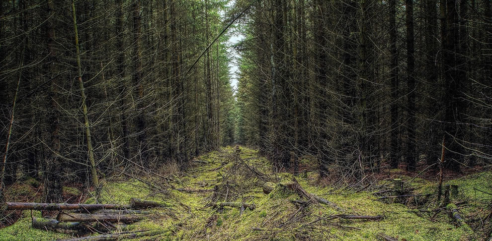 Deep in the spookily named Devilla Forest is located near Kincardine in Scotland