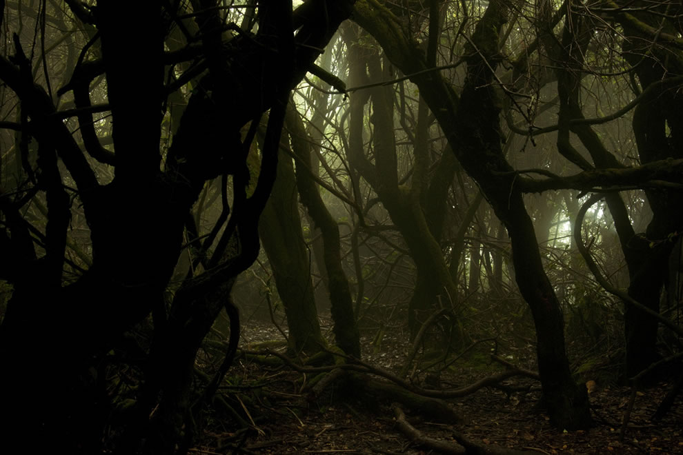 Enchanted Forest Doesn't it look Spooky