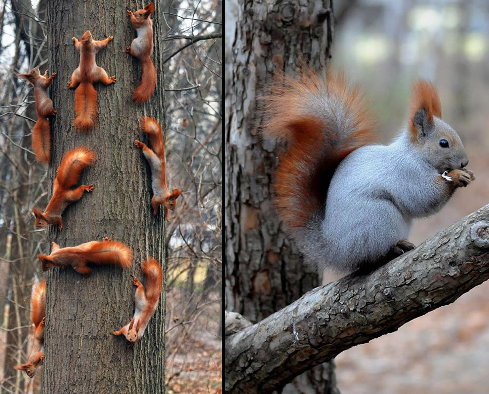 Squirrel Family meeting vs squirrel alone time