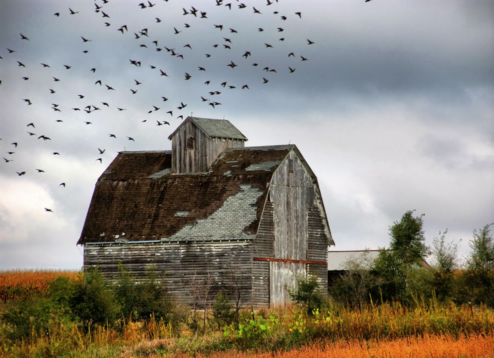 Farm buildings and the birds, Southern Story County, Iowa, USA