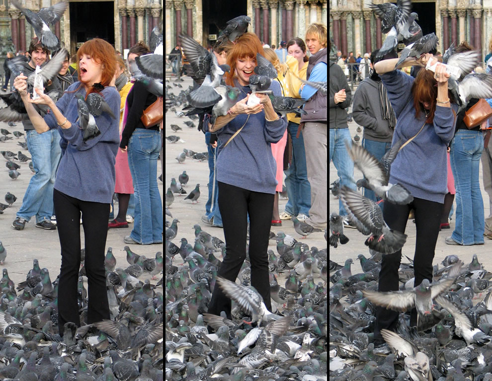 Hitchcock The Birds Feeding Friendzy A woman makes 200 new friends in St. Mark's Square
