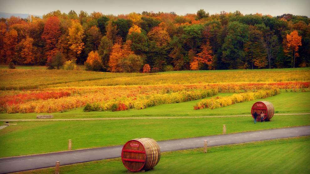 Finger Lakes, NY Autumn Glenora Wine Cellars, Dundee, NY