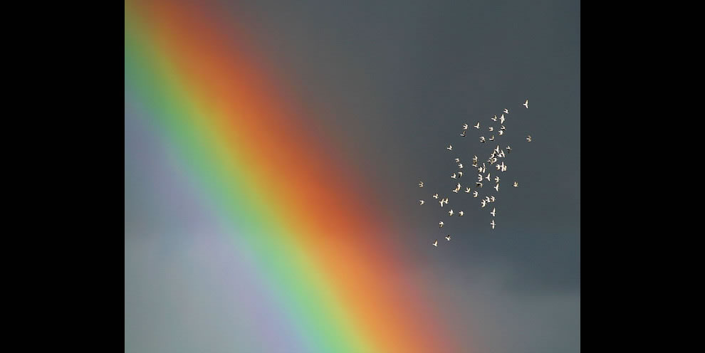 Flock of pidgeons and a gorgeous rainbow over Lage-Waddenhausen