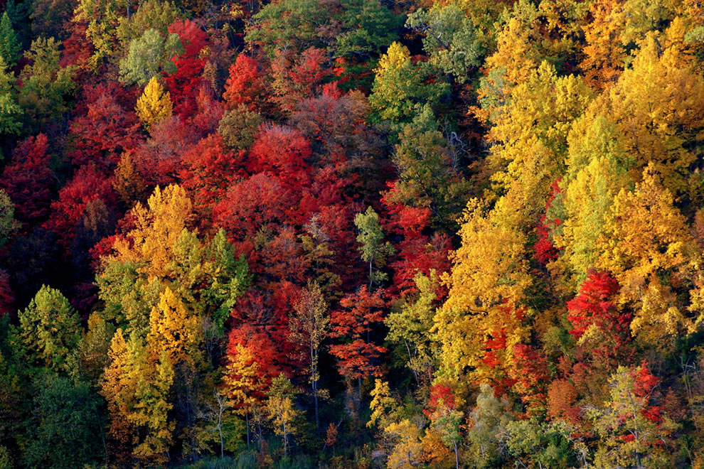 Forest bursting with vibrant fall colors at Whirlpool Rapids, Niagara