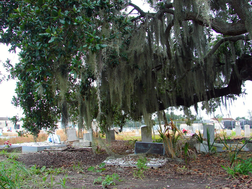 Forever at rest under the Spanish moss at Holt Cemetery, New Orleans