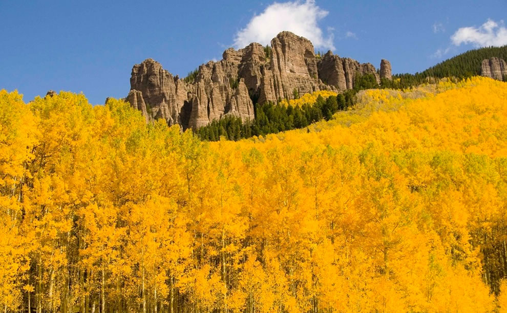 Golden aspens below the mountains