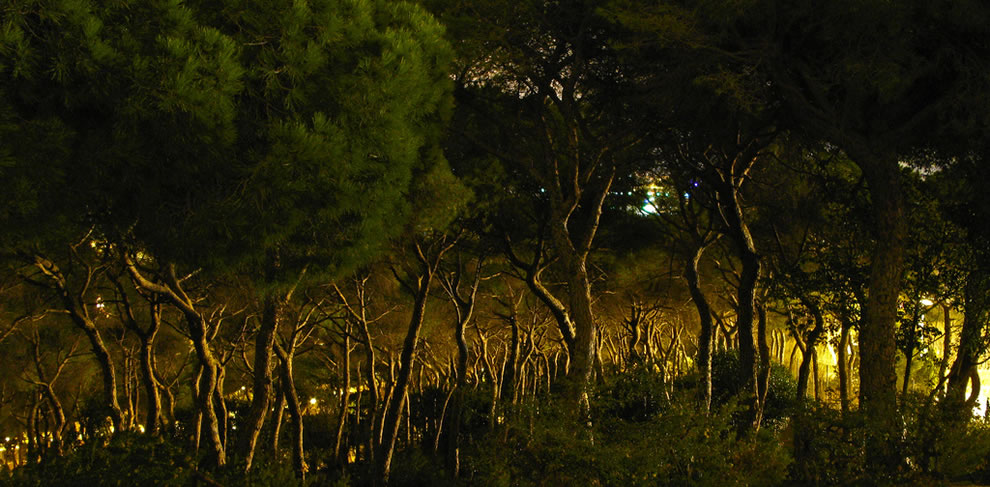 Haunted forest in Barcelona Spain