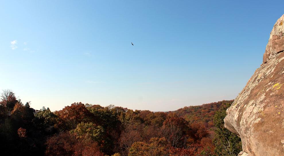 Hawk circling for prey Garden of the Gods