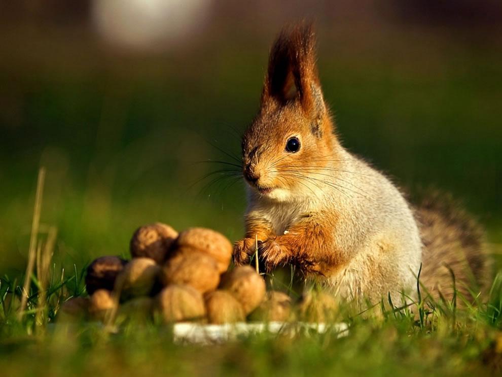 Hoarder squirrel