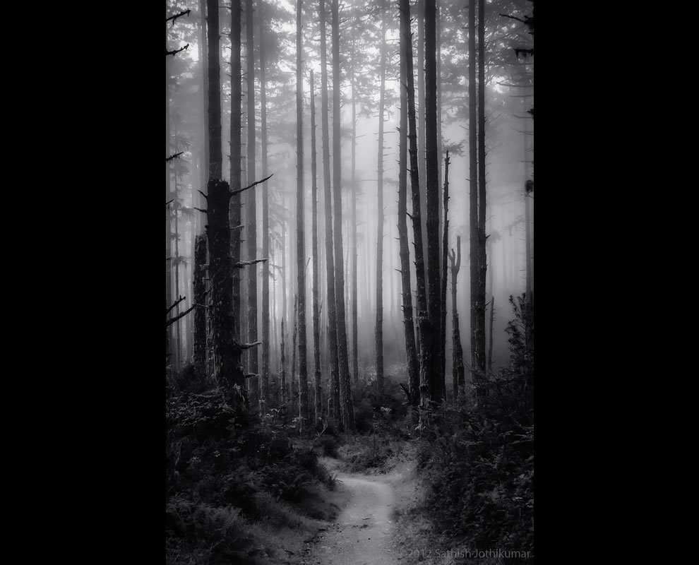 In the misty way, trail that weaves through a seemingly haunted redwood forest