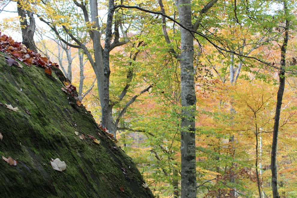 Mossy rocks and autumn foliage descending to Pounds Hollow