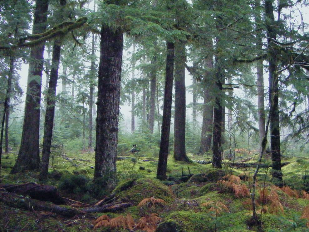 Mt. Hood National Forest, Oregon