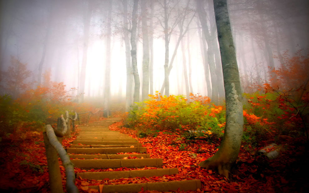 Path through foggy forest during fall