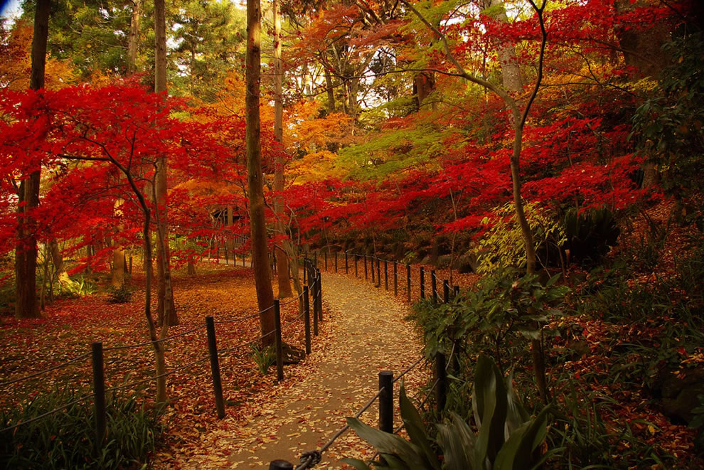 Pathway through autumn