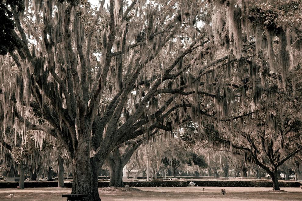 Sarasota Memorial Park, Sarasota, Florida