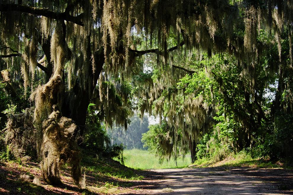 Savannah National Wildlife Refuge, South Carolina