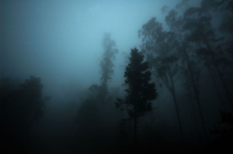 Shadows in the gloomy mist of a haunted forest