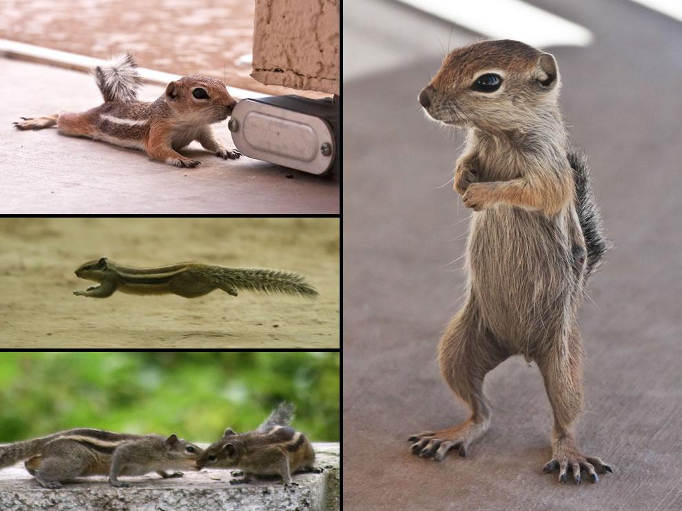 Skinny squirrels