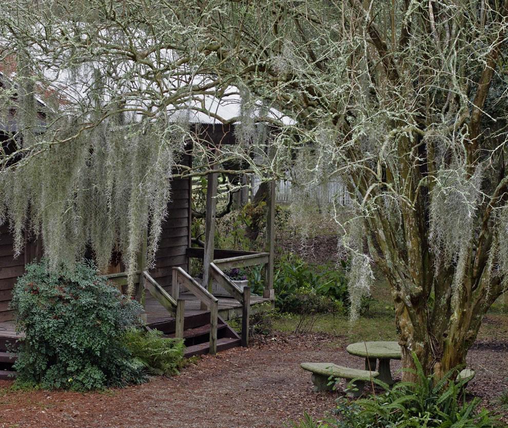 Slave cabins at Destrehan Plantation spanish moss