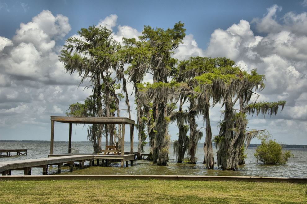 Spanish moss hanging on Cypress trees in Lake Verret Louisiana