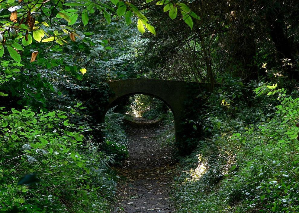 Spooky, Lovecraftian Greyfriars woods in Dunwich, Suffolk