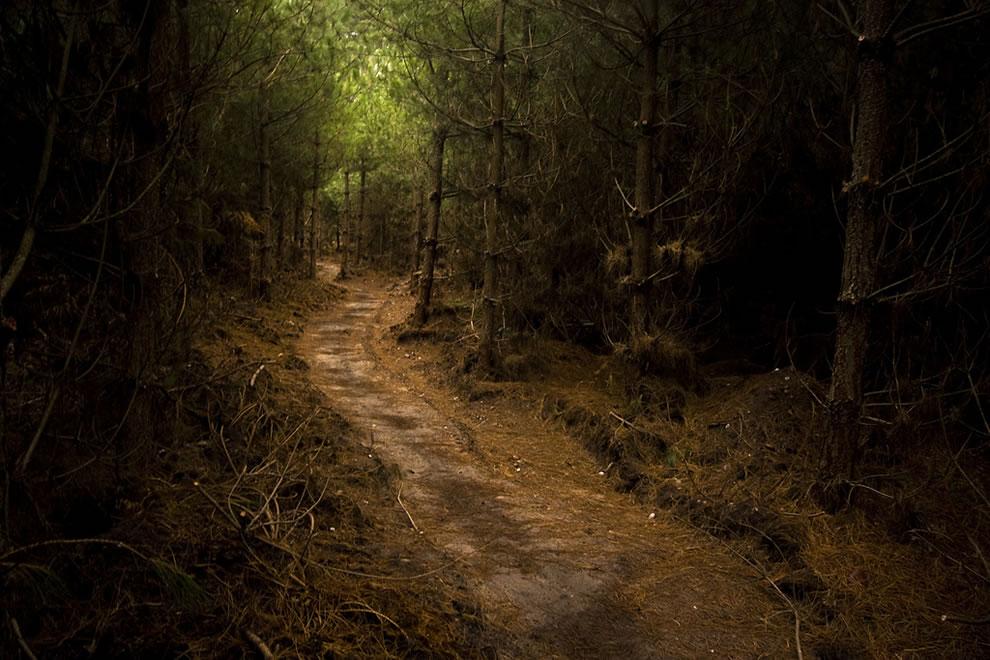 The Beaten Path taken in Sherwood Forest, Nottinghamshire