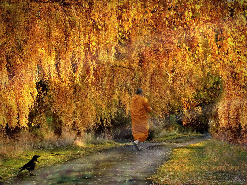 The Golden Path, fall foliage in autumn