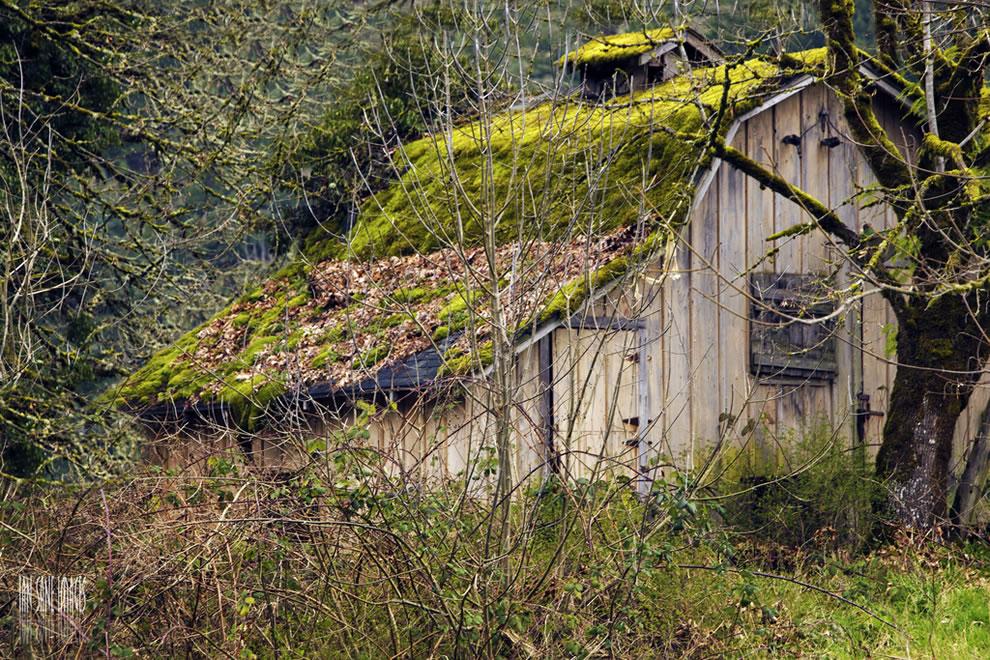The Greenhouse Effect in Silverton Oregon