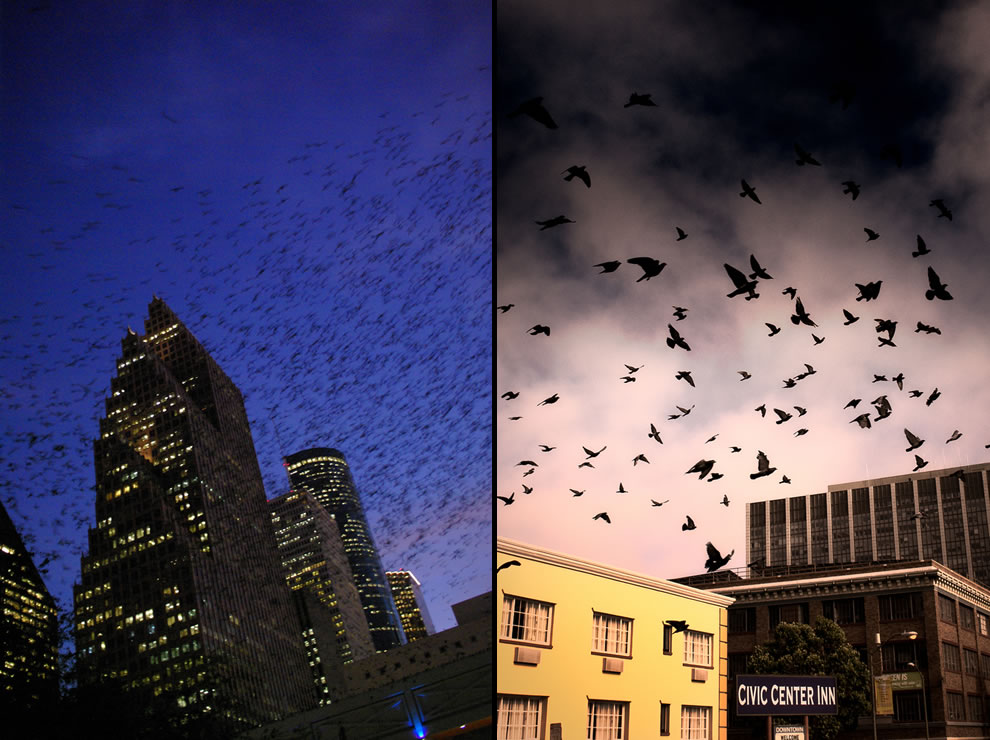 The birds, Houston and San Francisco