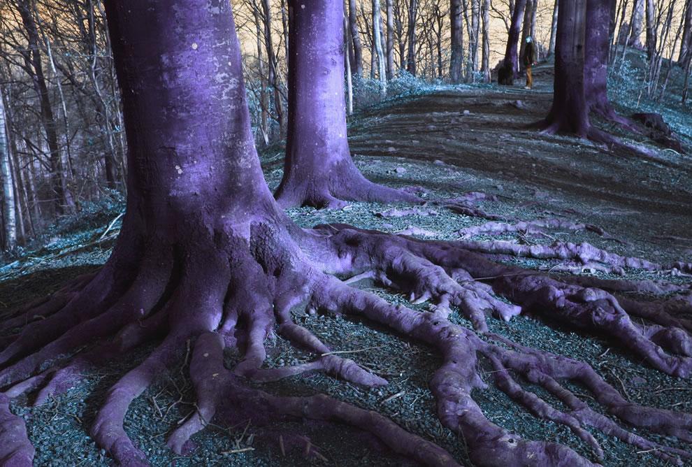 The spooky Woods Of Skåne