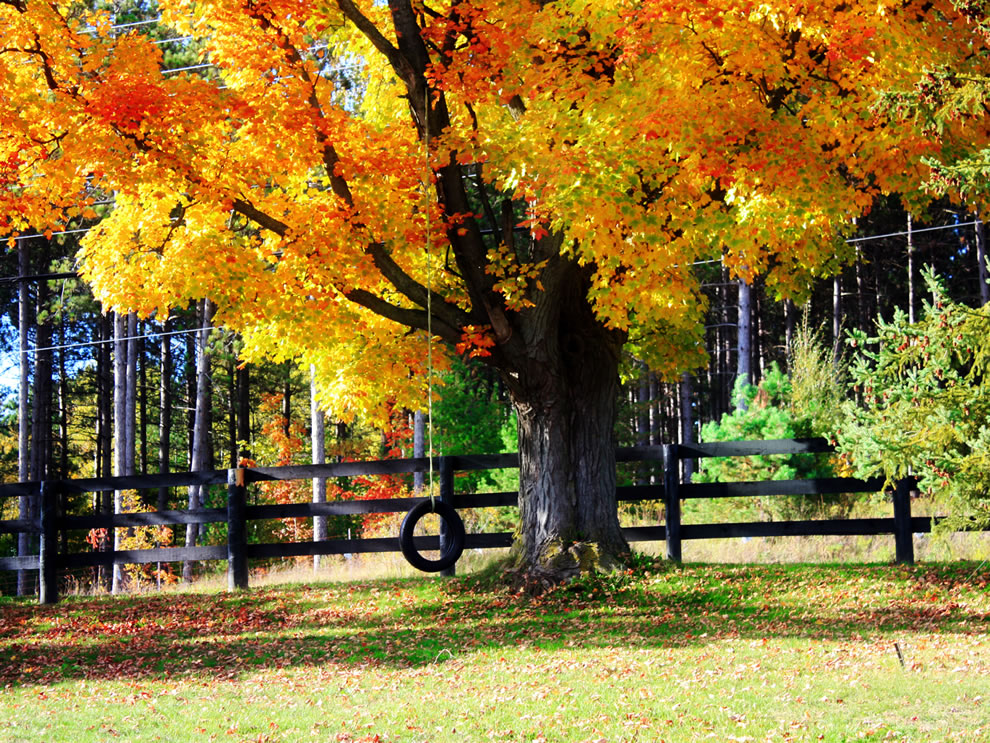 Fall season, Tree Tire Swing in Autumn