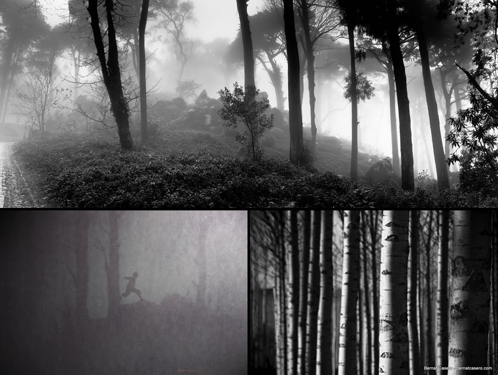 A haunting view of the woods on a cold autumn day, forest of the the lost boys, the lost scary woods