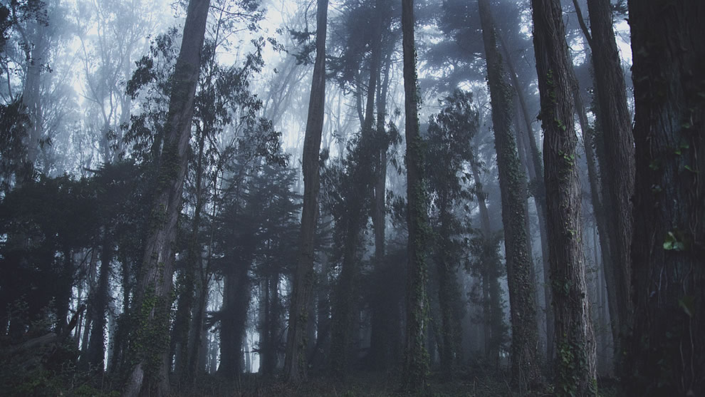 Distance, this foggy wooded scene was tagged as dark, scary