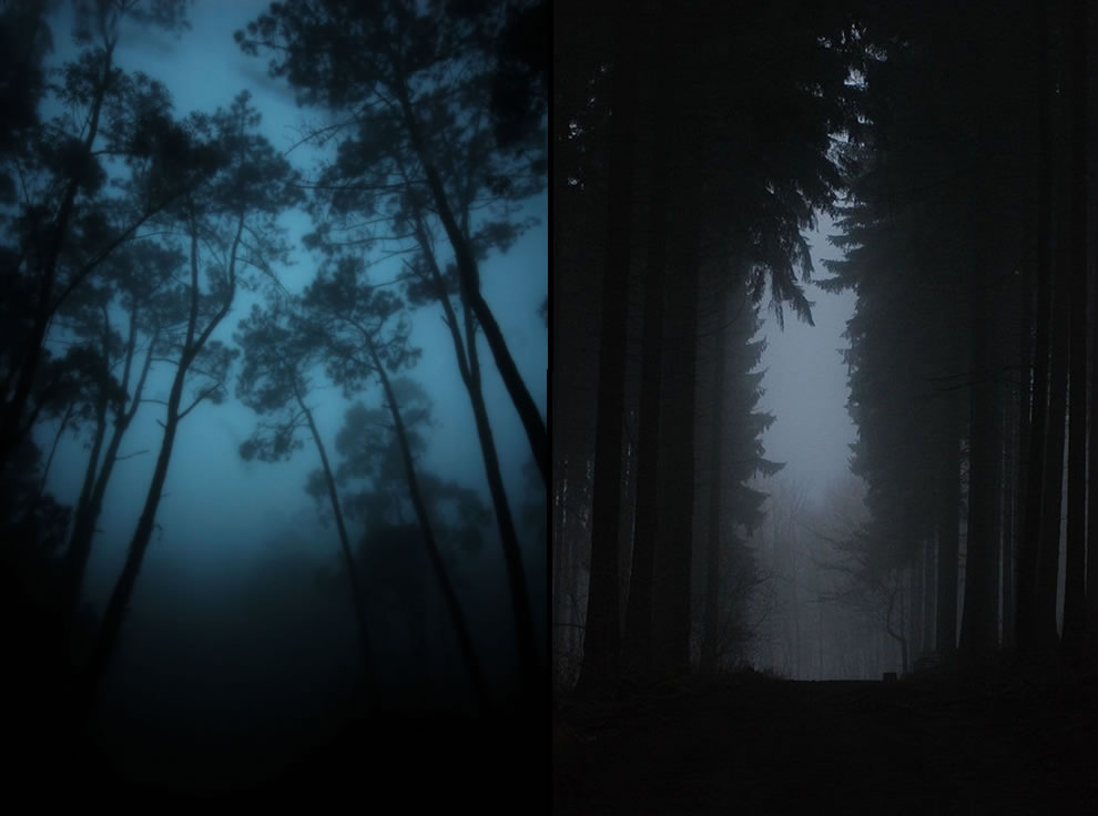 eerie mist in the Sintra forest of Portugal, foggy dark path thru the woods