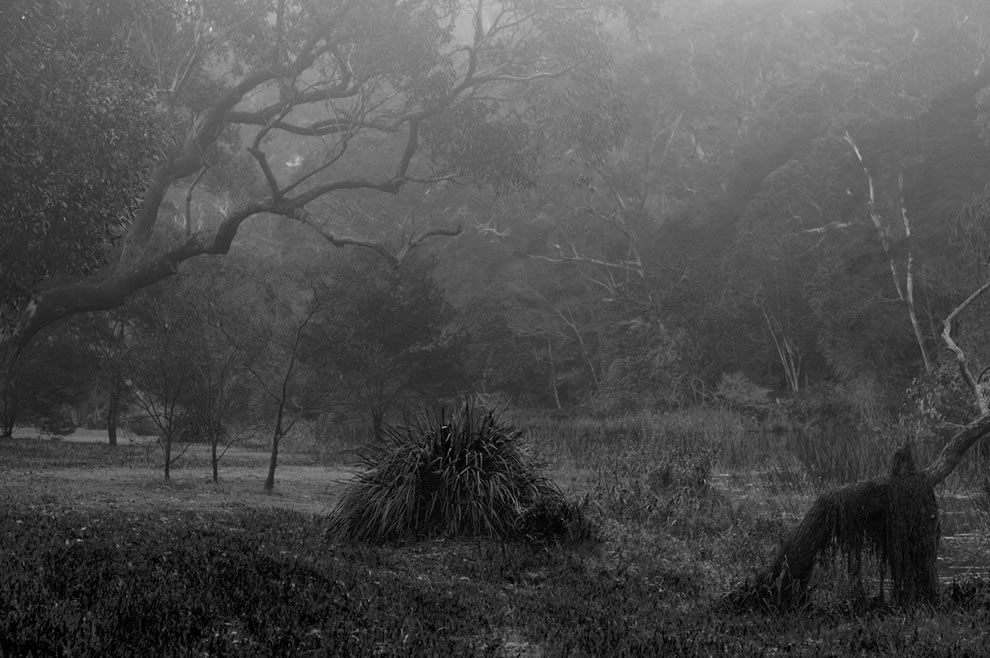 misty mystical forest -- the national park near sutherland in sydney
