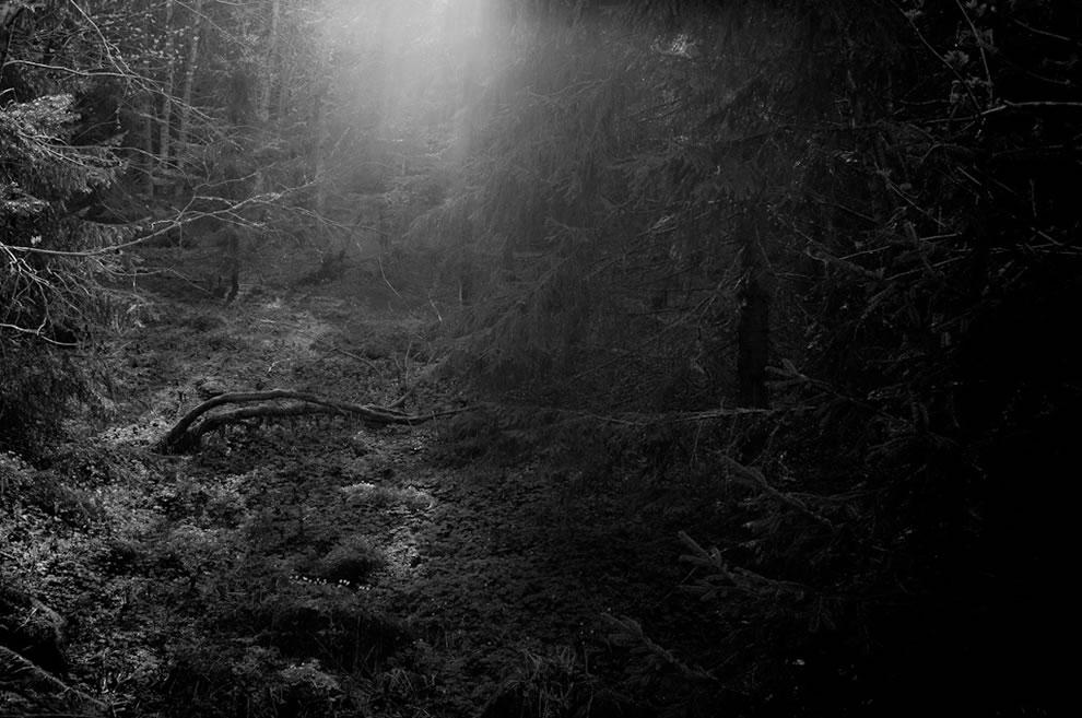 spooky fairy tale woods