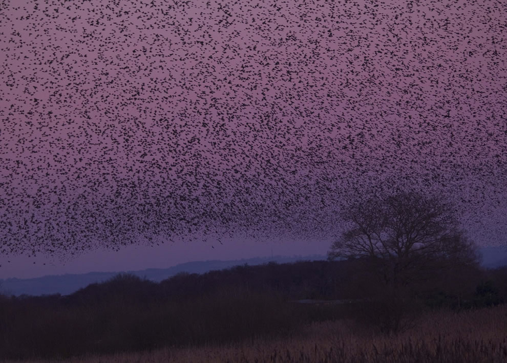 A Sky Full of Starlings