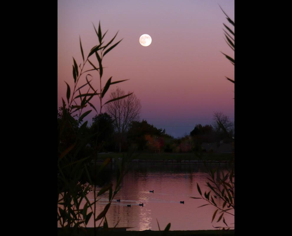 Harvest Moon ducks at EB Rains Park in Northglenn, Colorado