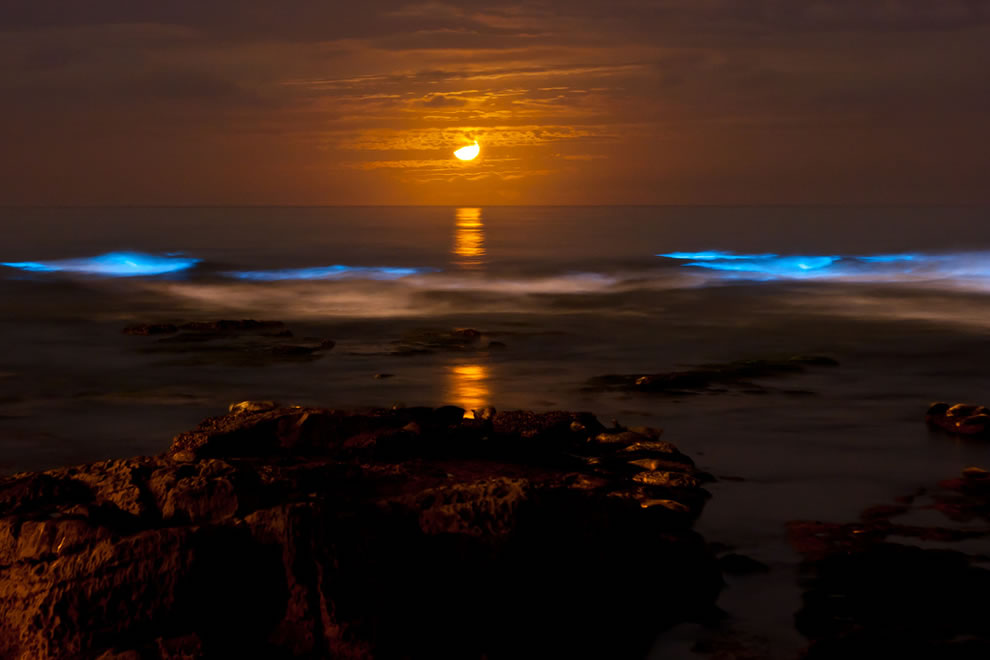 Red moon and Bioluminescent tide