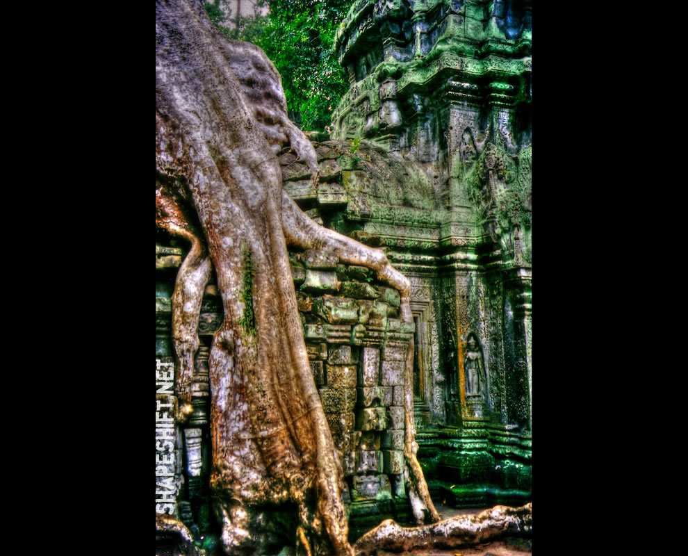 Roots of Ta Prohm Temple