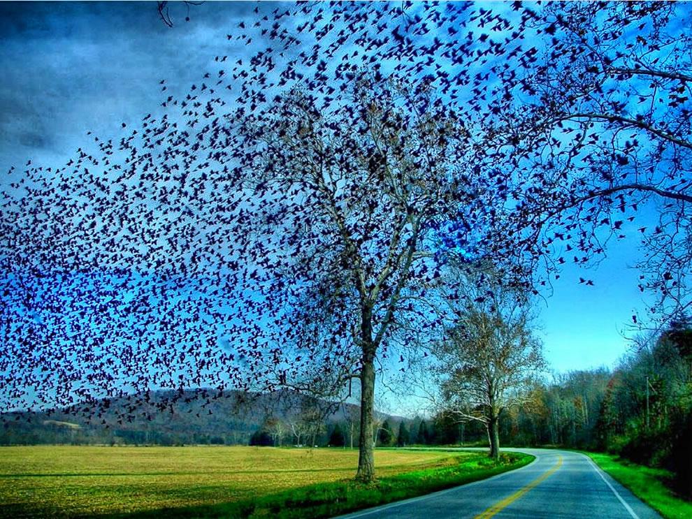 Startling starlings