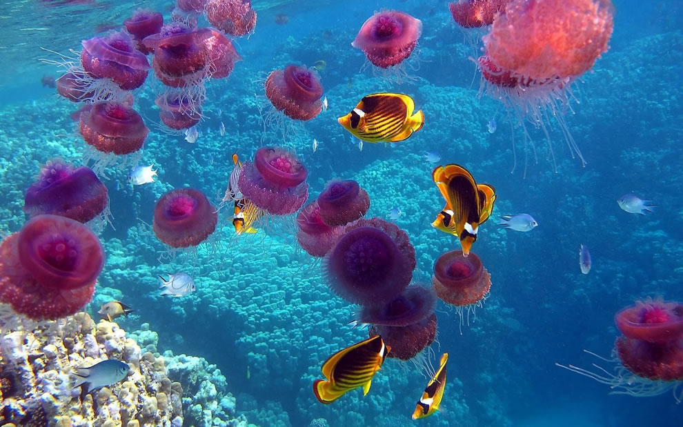 jellyfish and tropical fish