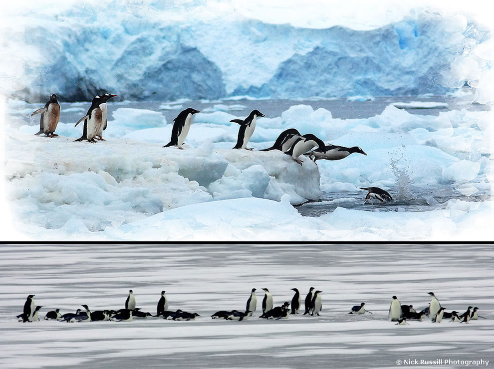 Antartica and King Emperor Penguins
