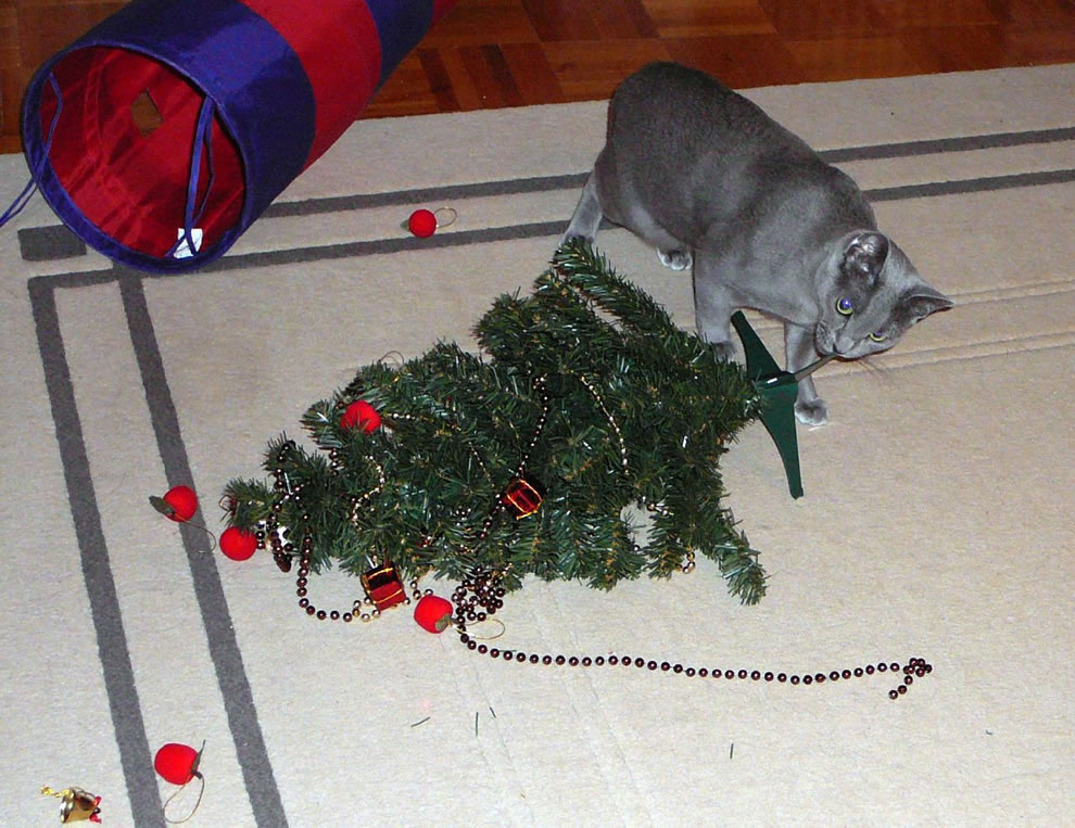 Cat vs Christmas tree, cat wins