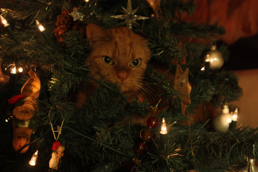Celebrating christmas the only right way: In the tree