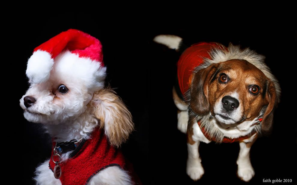 Christmas dog elves