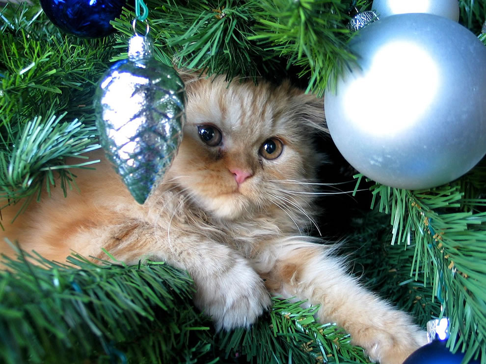 Friderika kitty in the Christmas tree