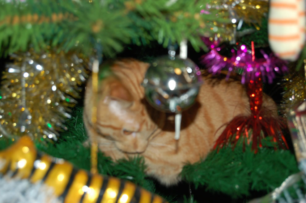 I don't remember putting that on the tree