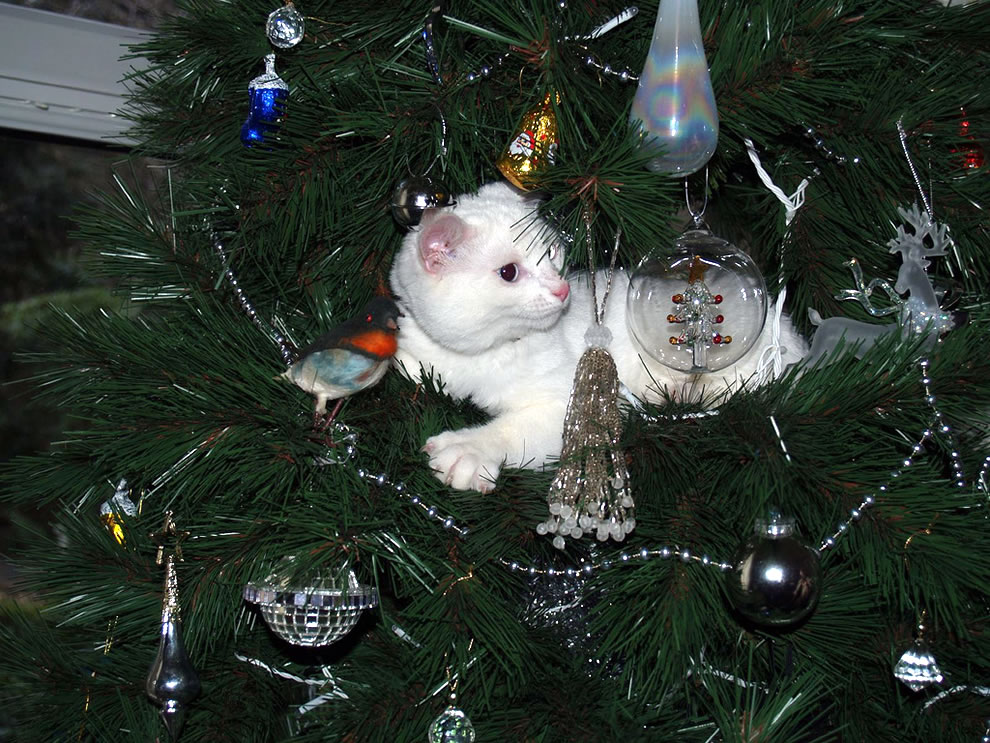 cat in the Christmas tree about to pounce on ornament