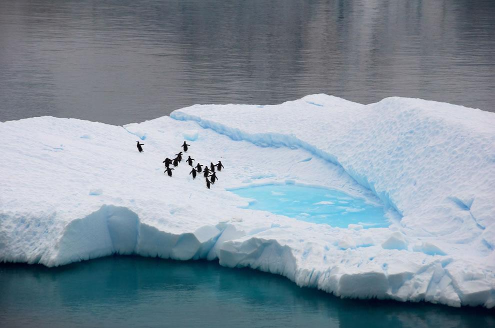 Penguin oasis